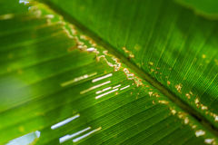 Green plant leaf Royalty Free Stock Photography