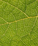 Green plant leaf part extreme closeup Stock Images