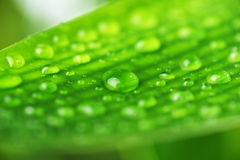 Green plant leaf Stock Photography
