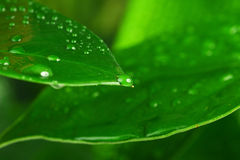 Green plant leaf Royalty Free Stock Image