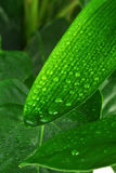 Green plant leaf Stock Image
