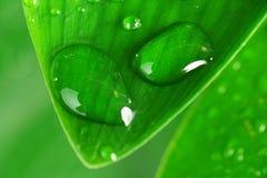 Green plant leaf Royalty Free Stock Photos