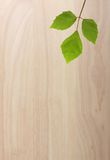 Green plant leaf on wooden background Stock Photos