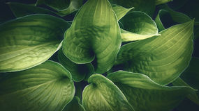 Green plant leafs detail closeup Royalty Free Stock Images