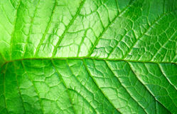 Green plant leave, detail. Pattern Stock Image