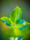 Green plant leaves Stock Image