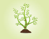 Green plant with leaves Royalty Free Stock Photo