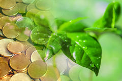 Green plant leaves on a background of money . stock image