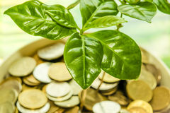 Green plant leaves on a background of money . The concept of the growth of financial investments Stock Photography