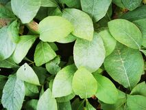 Green plant leaves background photo
