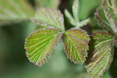 Green plant leaves Stock Photos