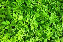 Green plant leaves. Closeup texture Stock Photos
