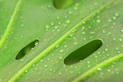 Green plant leaves with dew in a garden Stock Photos