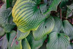 Green plant leaves in park Stock Image
