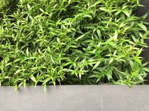 Green Plant Leaves Wall Background stock image