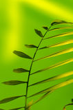 Green plant. On light green background Royalty Free Stock Image