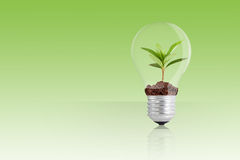 Green plant in light bulb Stock Photos