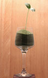 Green plant in a little glass with green sand Stock Photography