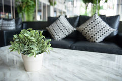 Green plant in living room Stock Image