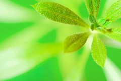 Green plant macro Stock Photography