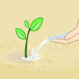 Green plant male hands. Hands watering and green plant Royalty Free Stock Images