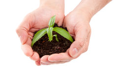 Green plant in a man hand Royalty Free Stock Photos