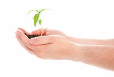 Green plant in a man hand Stock Photography
