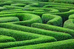 Green plant maze. Form top Royalty Free Stock Images