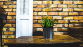 Green plant in a metal pot royalty free stock image
