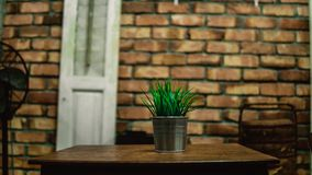Green plant in metal pots in restaurant. royalty free stock images