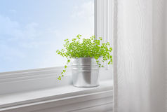 Green plant in a modern home Stock Photo