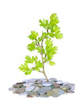 Green plant and money. Abstract green plant and coins fresh growing business concept Royalty Free Stock Photography