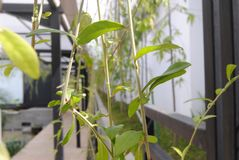 green plant stock photos