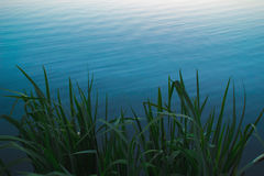 Green Plant Near Body of Water Royalty Free Stock Photo