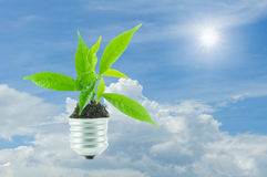 Green plant new life on lamp out of a bulb on, green energy conc Royalty Free Stock Images