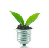 Green plant new life on lamp out of a bulb, green energy concept Stock Photos