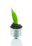 Green plant new life on lamp out of a bulb, green energy concept Stock Photography
