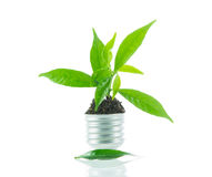 Green plant new life on lamp out of a bulb, green energy concept Stock Photo