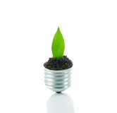 Green plant new life on lamp out of a bulb, green energy concept Royalty Free Stock Images