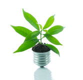 Green plant new life on lamp out of a bulb, green energy concept Stock Images