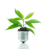 Green plant new life on lamp out of a bulb, green energy concept Royalty Free Stock Photo