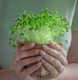 Green plant new spouts eco stock photo