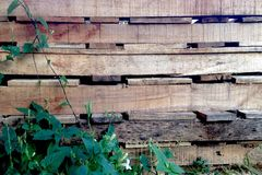 Green plant on old wood wall Stock Photo
