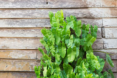 Green plant on old wood wall Stock Images