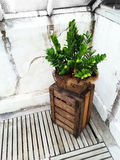 Green plant and old wooden crate Stock Photography