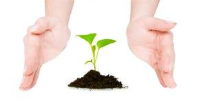 Green plant between open hands Stock Photo