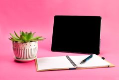 Green plant, open notebook, pen and tablet pc on blue background royalty free stock photo