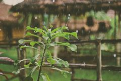 Green plant outdoors in the rain Royalty Free Stock Image