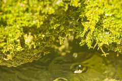 Green plant over water. With macro details Royalty Free Stock Image
