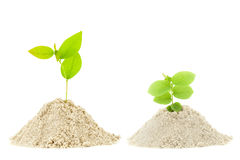 Green plant  on pile sand isolated on white background. Royalty Free Stock Images